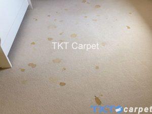 vết nước tiểu động vật trên thảm